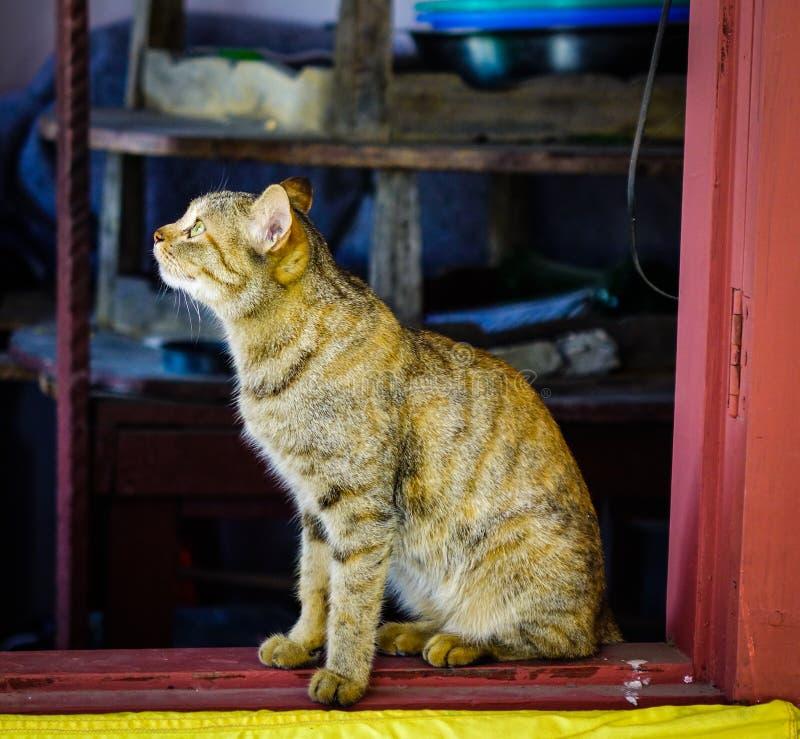 Un chat mignon détendant à la maison rurale image stock