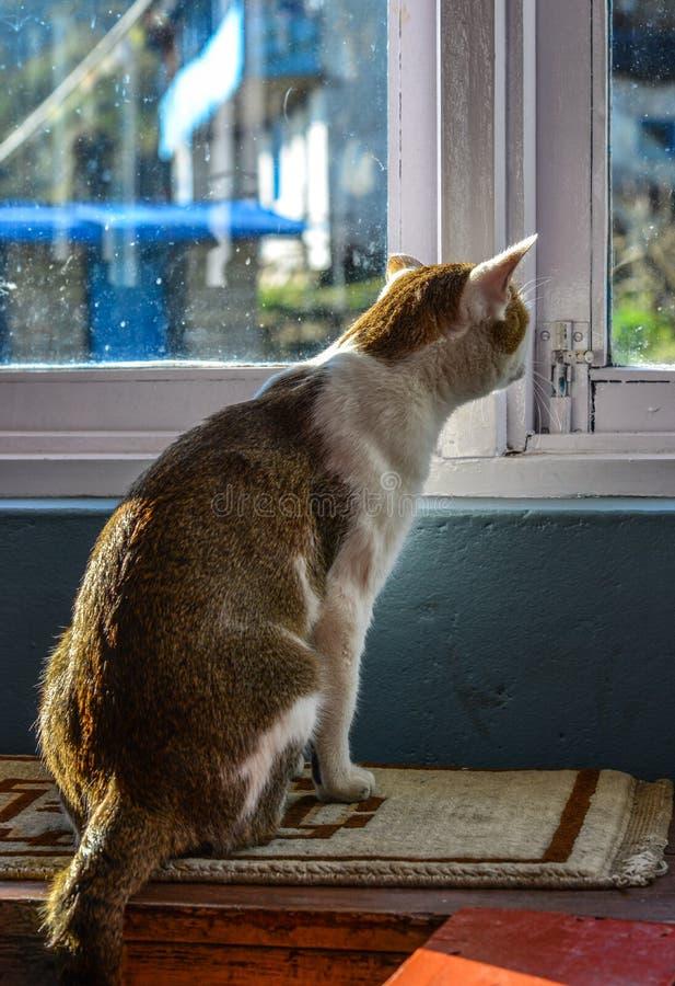 Un chat mignon d?tendant ? la maison rurale photographie stock libre de droits