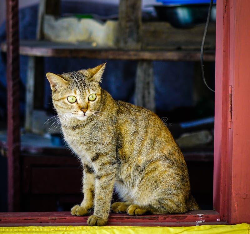 Un chat mignon d?tendant ? la maison rurale images stock