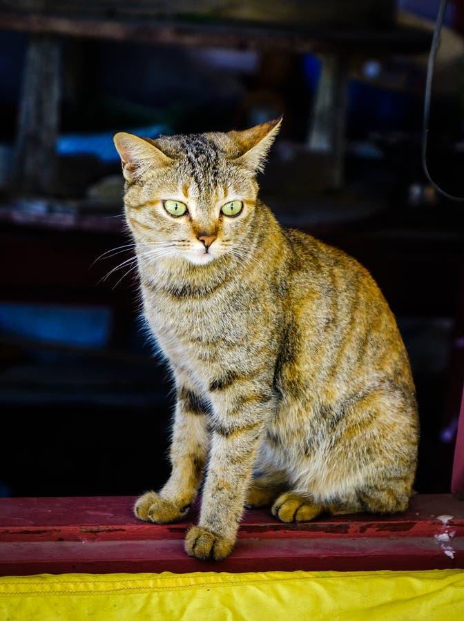Un chat mignon d?tendant ? la maison rurale photo libre de droits
