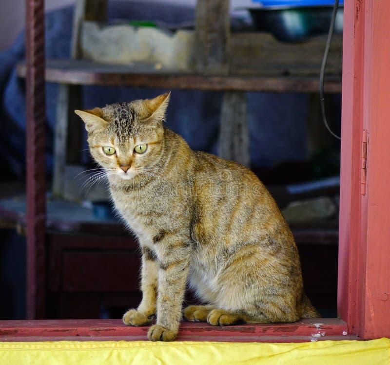 Un chat mignon d?tendant ? la maison rurale image libre de droits