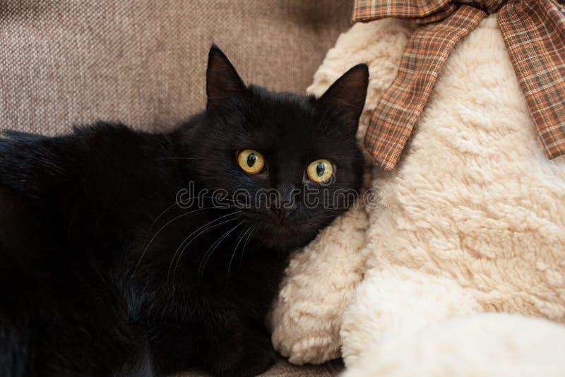 Un chat noir avec les yeux jaunes avec crainte vous regarde Problèmes mentaux et émotifs des chats photos stock