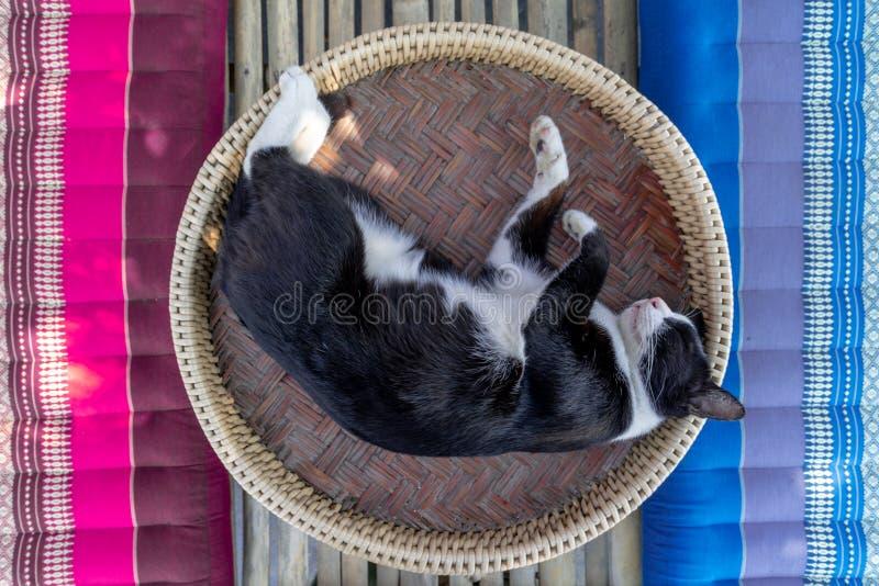 Un chat noir et blanc dort sur un Khantoke, un genre d'ustensile en bois utilisé comme table de salle à manger en Thaïlande du no image libre de droits