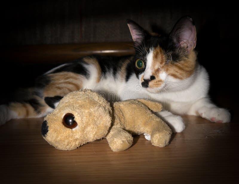 Un chat observé avec le jouet de pièce. image stock