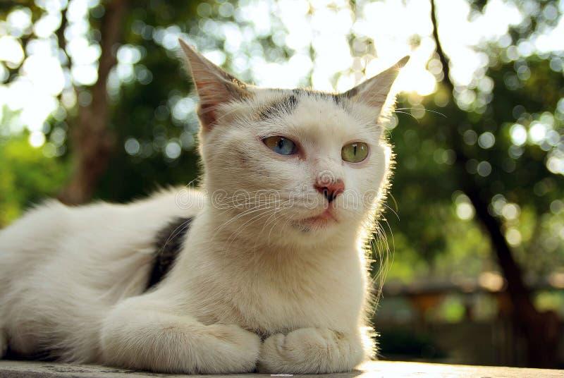 Un chat persan images libres de droits