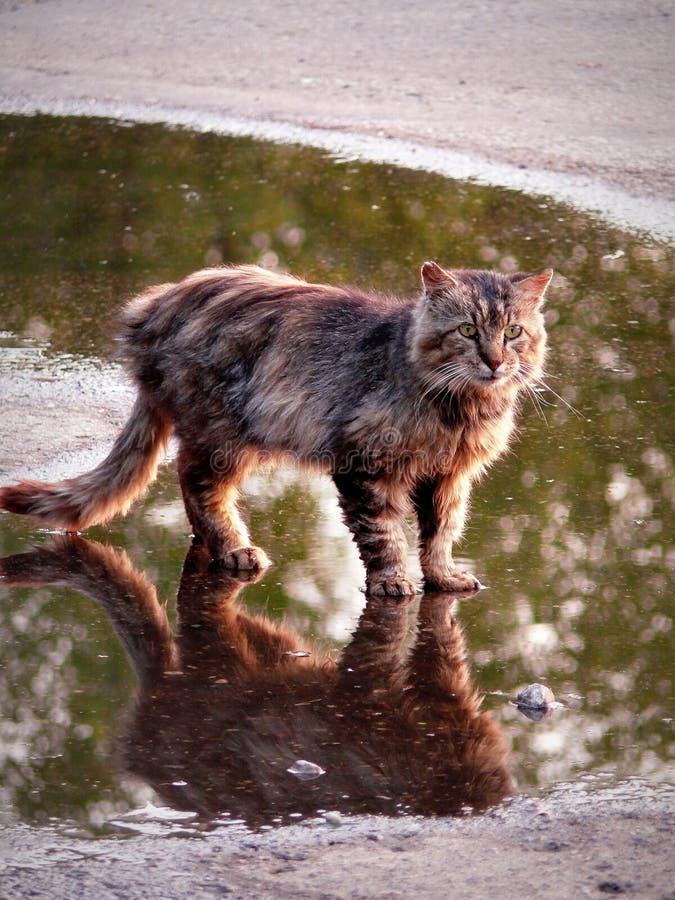 Un chat peu commun dans le village photographie stock libre de droits