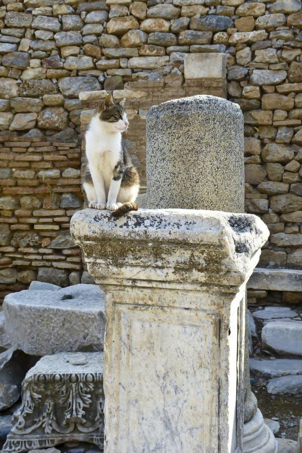 Un chat se reposant sur la colonne dans la ville Ephesus du grec ancien photographie stock libre de droits