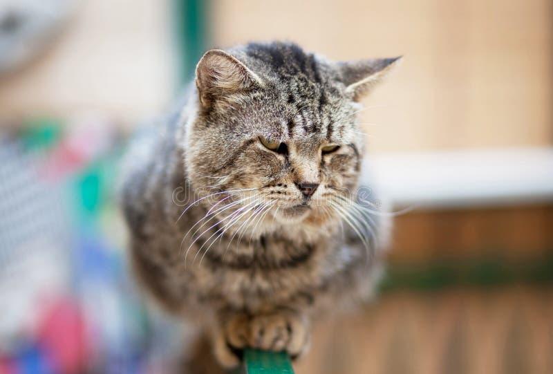 Un chat se reposant sur une perche à la perche Le chat est réfléchi et ressemble à un dormeur images libres de droits
