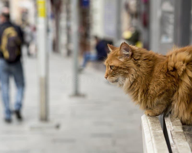 Un chat solo se reposant dans un banc dans la dinde d'Istanbul image stock