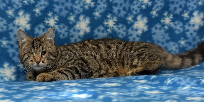 Un chaton borgne photo stock