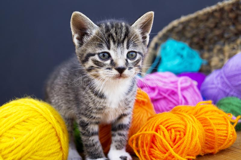 Un chaton rayé joue avec des boules de laine Panier en osier, plancher en bois et fond noir photos libres de droits
