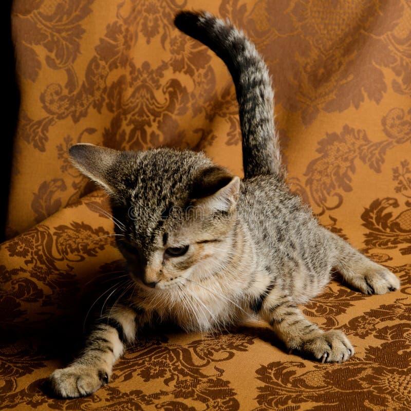 Un chaton tigré mignon jouant sur le divan de tissu de vintage image stock