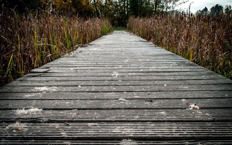 Un chemin à ? photo stock