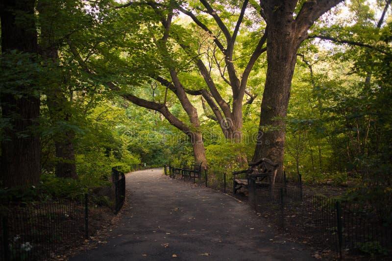 Un chemin à travers les arbres dans le Central Park, New York City photo libre de droits