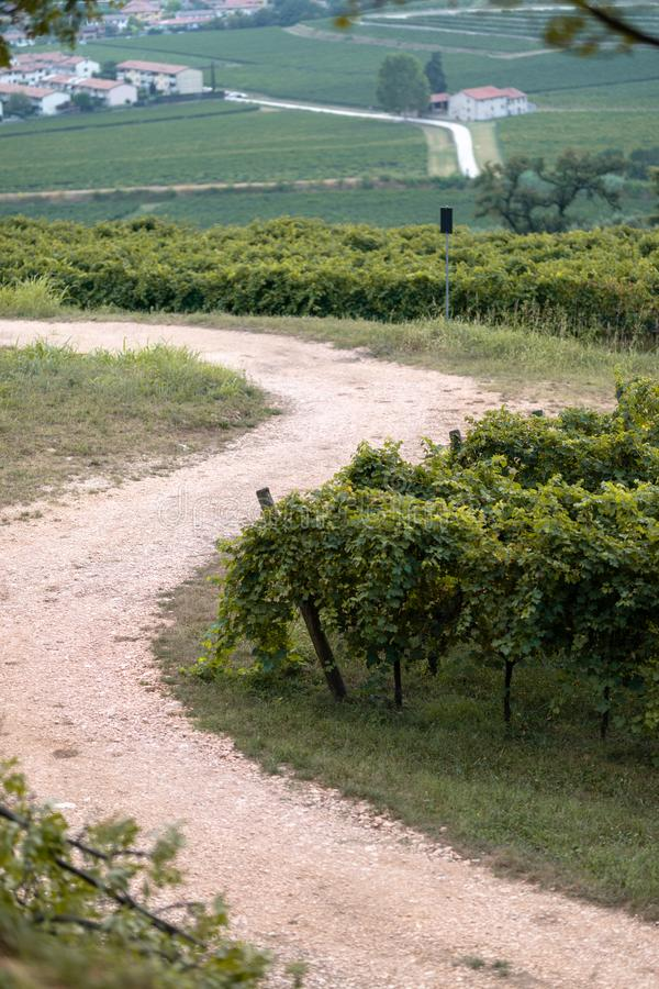 Un chemin à travers un vignoble photo stock