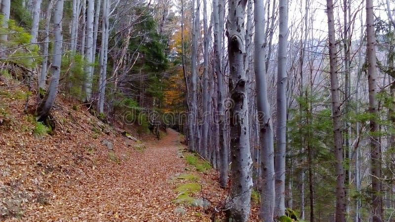 Un chemin dans la forêt image stock