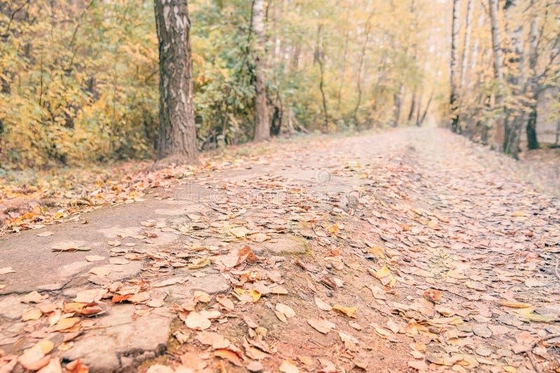 Un chemin dans la forêt d'automne, au loin, avec des feuilles jaunes et rouges image libre de droits