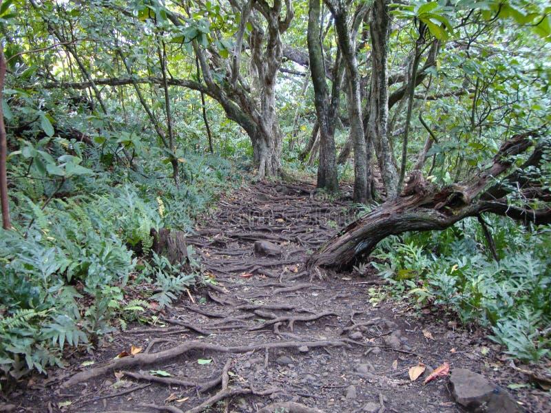 Un chemin de jungle dans Maui images libres de droits
