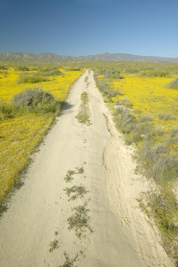 Un chemin de terre à distance par le jaune lumineux de ressort fleurit et l'or de désert près des montagnes dans le monument nati images stock
