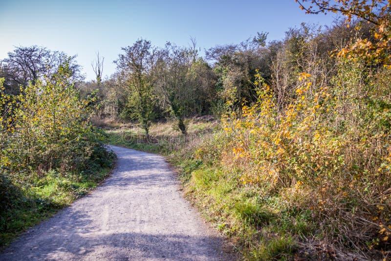 Un chemin de terre par la campagne photo stock