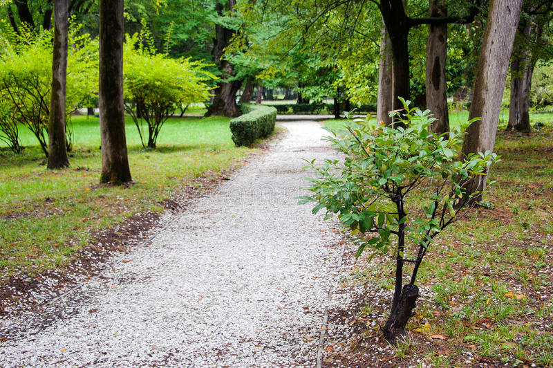 Un chemin du gravier blanc en parc photo libre de droits