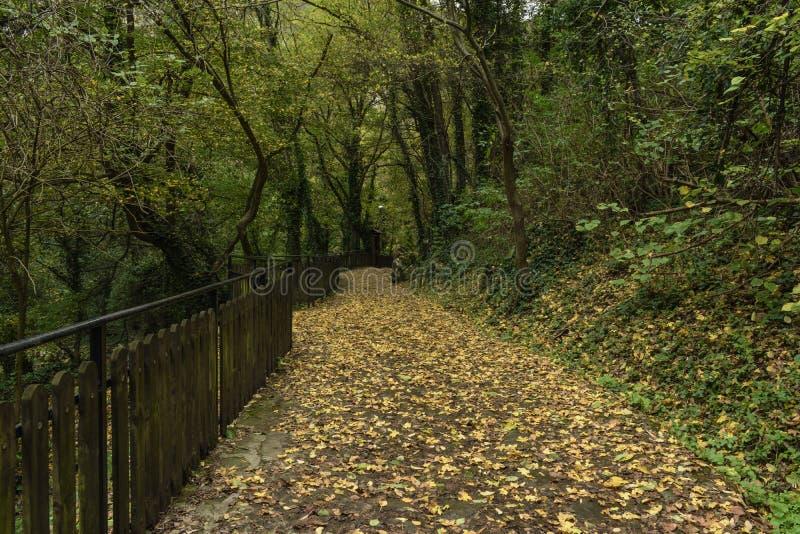 Un chemin empilé avec des feuilles d'automne de chute menant à une caverne image libre de droits