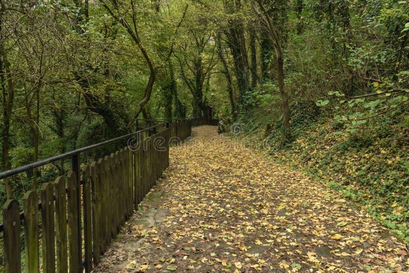 Un chemin empilé avec des feuilles d'automne de chute menant à une caverne photo stock