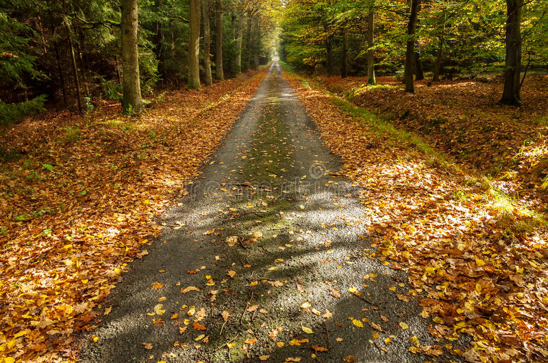 Un chemin en Autumn Forest image stock