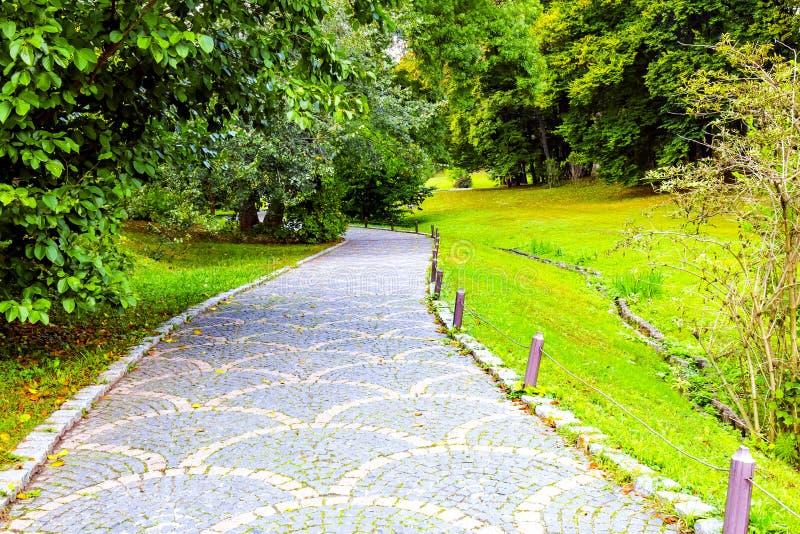 Un chemin en pierre gris avec l'ornement dans la forêt photo libre de droits