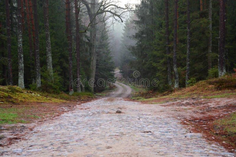 Un chemin forestier, a pavé dans une forêt humide photos stock