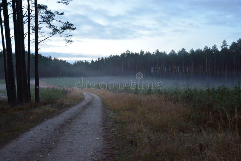 Un chemin forestier pendant le matin photos stock