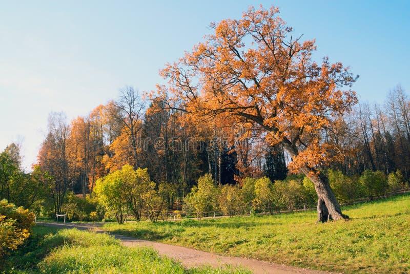 Un chemin le long de la forêt avec un chêne isolé en parc de Pavlovsk Autumn Landscape photographie stock libre de droits