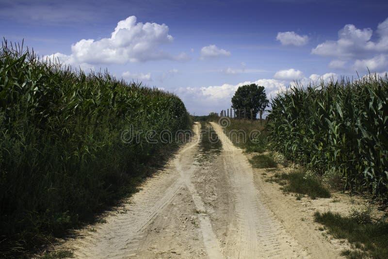 Un chemin poussiéreux entre le maïs image libre de droits
