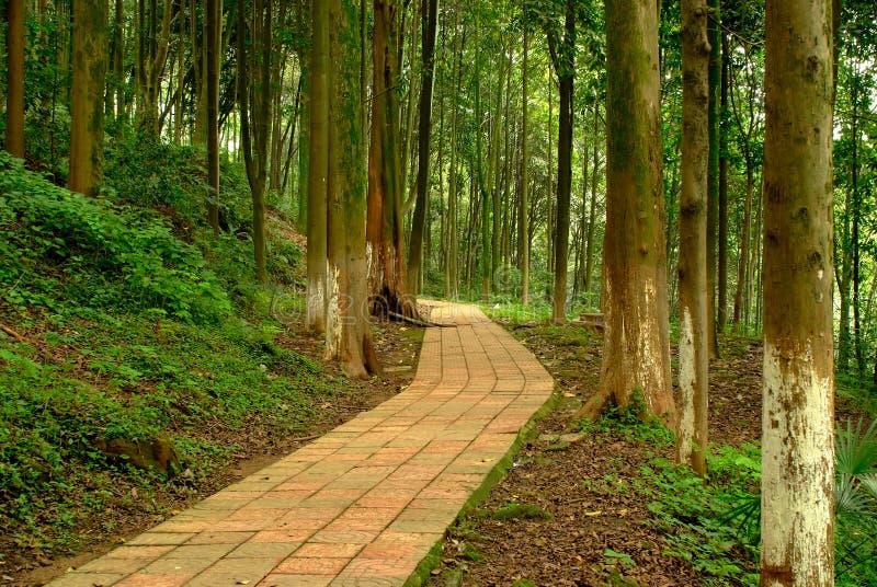Un chemin tranquille dans les bois photo stock image 34186656 - Un matin dans les bois ...