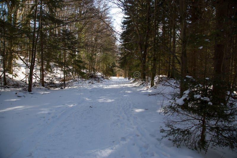 Un chemin tranquille et neigeux au milieu d'une forêt photographie stock libre de droits