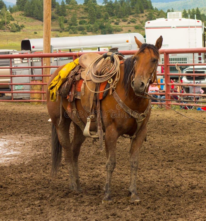 Un cheval équipé pour un rodéo à un événement annuel dans le Colorado photographie stock