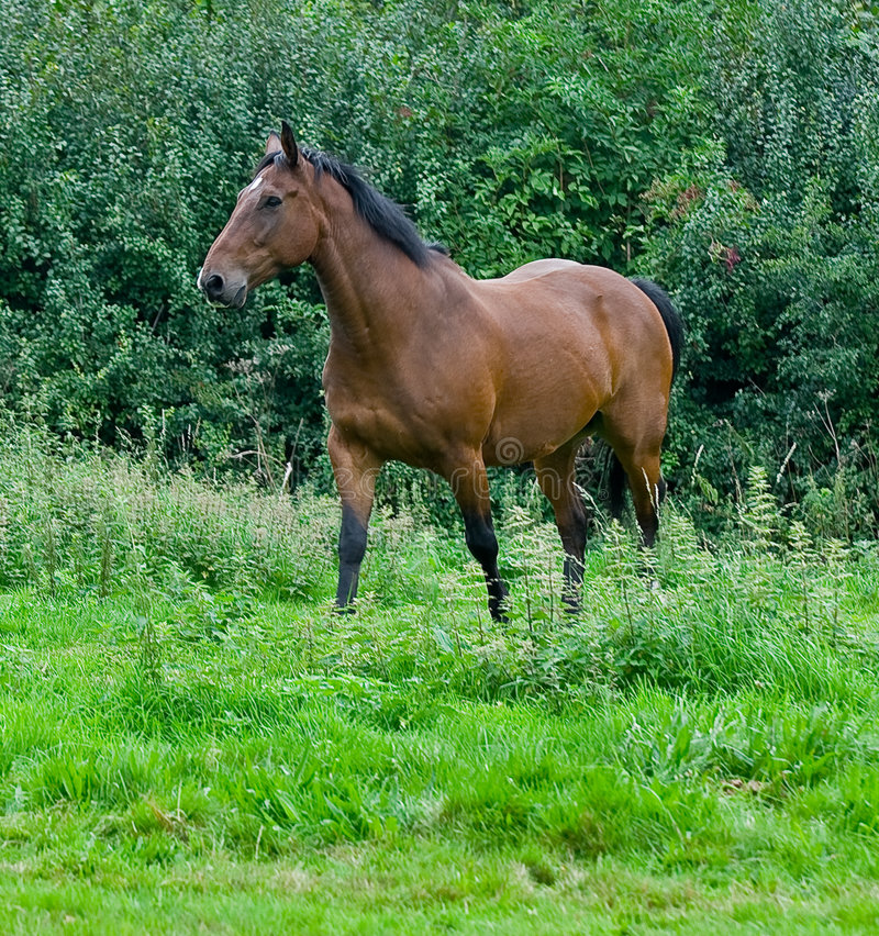 Un cheval images stock