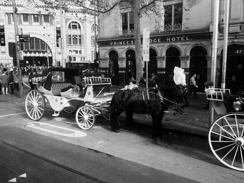 Un cheval aux vieux remorquages photographie stock libre de droits