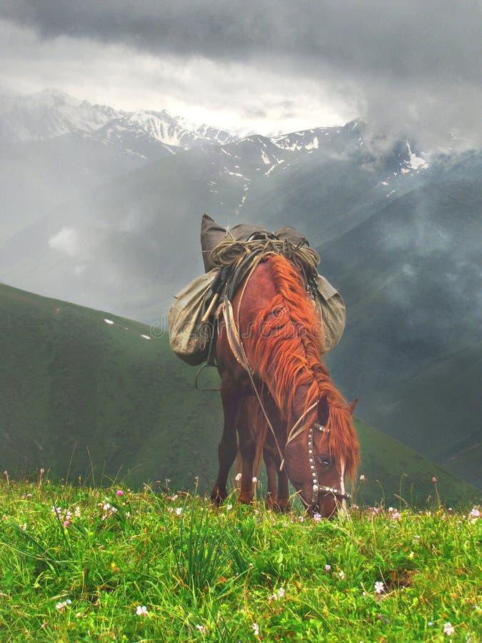 Un cheval avec une belle crinière rouge frôle dans un pré photos stock
