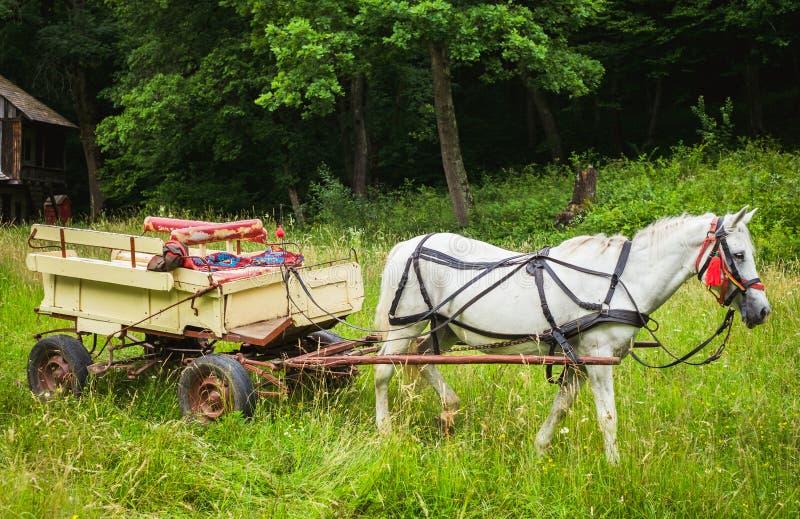 Un cheval blanc avec un chariot en bois images stock