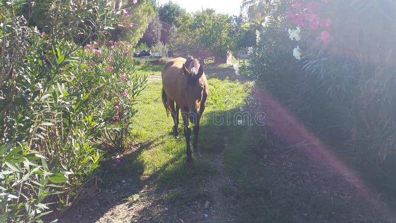 Un cheval dans la cour images libres de droits
