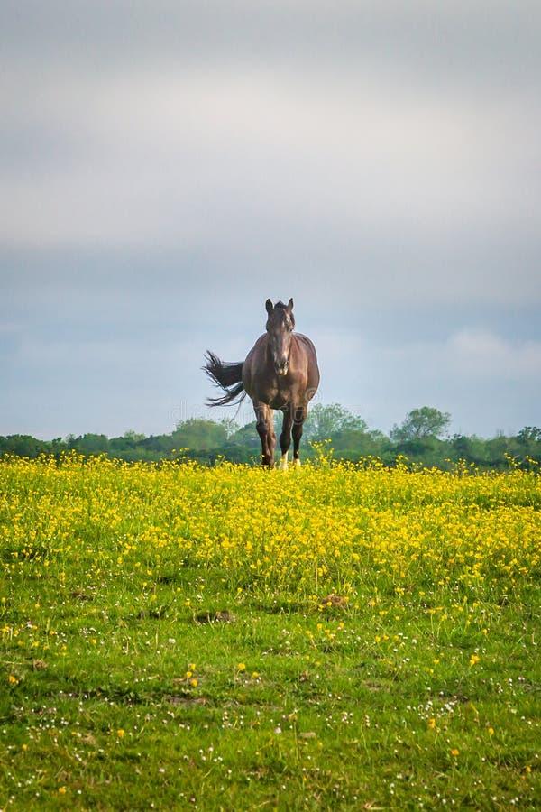 Un cheval dans un pr? images libres de droits