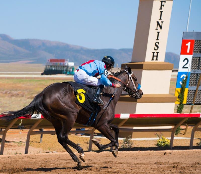 Un cheval de course croise la ligne d'arriv?e mani?re en avant de sa concurrence photographie stock