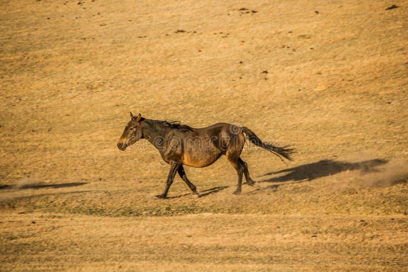 Un cheval en montagnes de Kirgiz image libre de droits