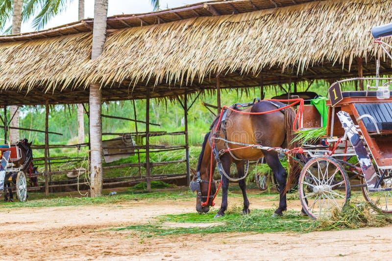 Un cheval et un beau vieux chariot dans la vieille ferme photographie stock libre de droits
