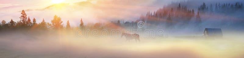 Un cheval frôle dans le brouillard photographie stock