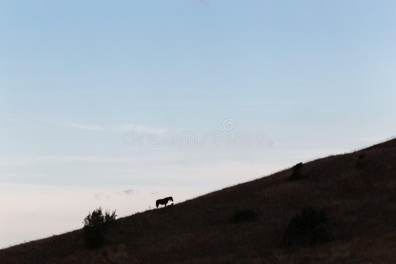 Un cheval marchant d'un côté d'une colline, sous la SK large et bleue photos stock