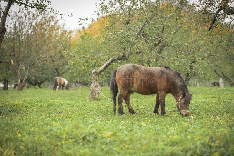 Un cheval marche dans le domaine photos libres de droits