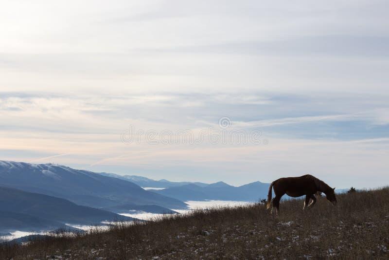 Un cheval rétro-éclairé, mangeant l'herbe, sur une montagne, avec un certain d photographie stock