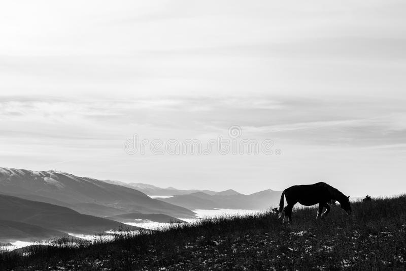 Un cheval rétro-éclairé, mangeant l'herbe, sur une montagne, avec un certain d photos stock